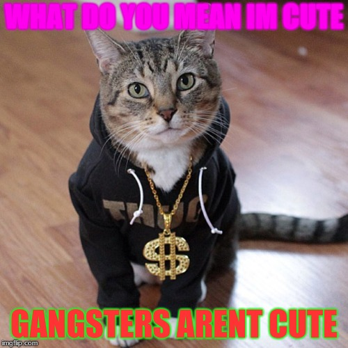 WHAT DO YOU MEAN IM CUTE GANGSTERS ARENT CUTE | image tagged in cats | made w/ Imgflip meme maker