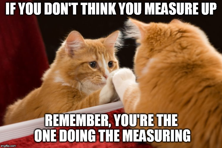 Show Yourself Some Love | IF YOU DON'T THINK YOU MEASURE UP REMEMBER, YOU'RE THE ONE DOING THE MEASURING | image tagged in cat | made w/ Imgflip meme maker
