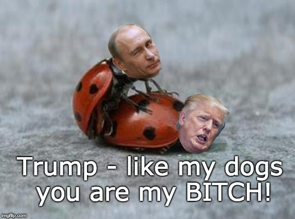 Putin played Trump - Trump Putin's Bitch | Trump - like my dogs you are my B**CH! | image tagged in love bug,putin's puppet,trump russia collusion,trump fail,trump fool,putin winner | made w/ Imgflip meme maker