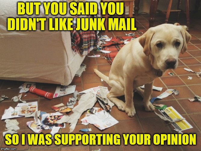 They learn it from watching us. | BUT YOU SAID YOU DIDN'T LIKE JUNK MAIL SO I WAS SUPPORTING YOUR OPINION | image tagged in memes,junk mail,dogs,got your back,bad dog | made w/ Imgflip meme maker