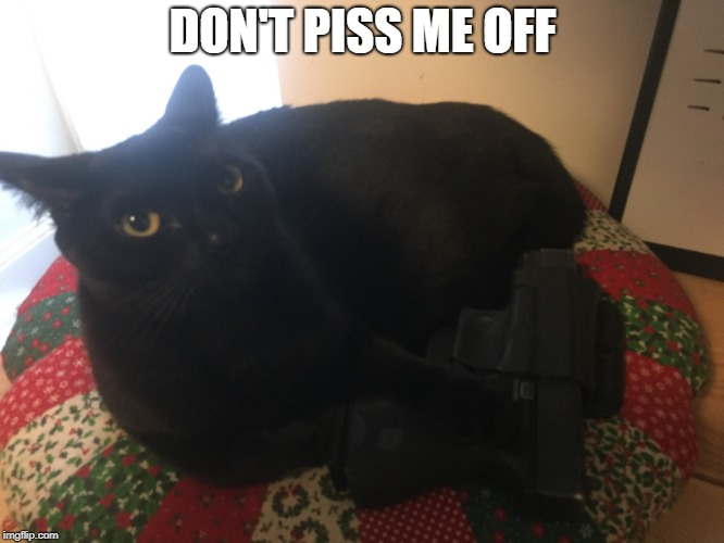 DON'T PISS ME OFF | image tagged in cat memes,angry cat,guns,glock,black cat | made w/ Imgflip meme maker