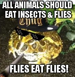 frogs | ALL ANIMALS SHOULD EAT INSECTS & FLIES FLIES EAT FLIES! | image tagged in frogs | made w/ Imgflip meme maker