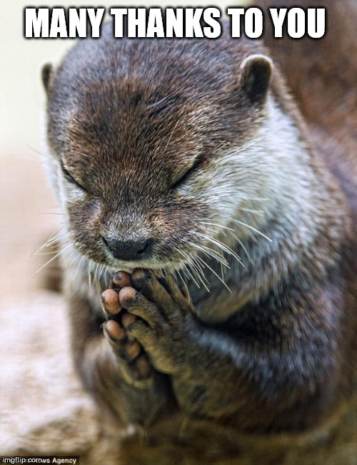 Thank you Lord Otter | MANY THANKS TO YOU | image tagged in thank you lord otter | made w/ Imgflip meme maker