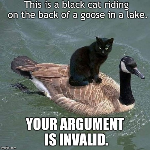 This is a black cat riding on the back of a goose in a lake. YOUR ARGUMENT IS INVALID. | image tagged in black cat riding on a goose | made w/ Imgflip meme maker