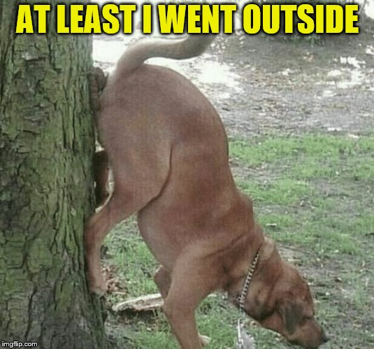 Dog wiping ass on tree | AT LEAST I WENT OUTSIDE | image tagged in dog wiping ass on tree | made w/ Imgflip meme maker