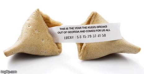 Doom Cookie | THIS IS THE YEAR THE KUDZU BREAKS OUT OF GEORGIA AND COMES FOR US ALL LUCKY #S 8-15-29-37-41-50 | image tagged in lucky numbers,fortune,waffle batter,tropes | made w/ Imgflip meme maker