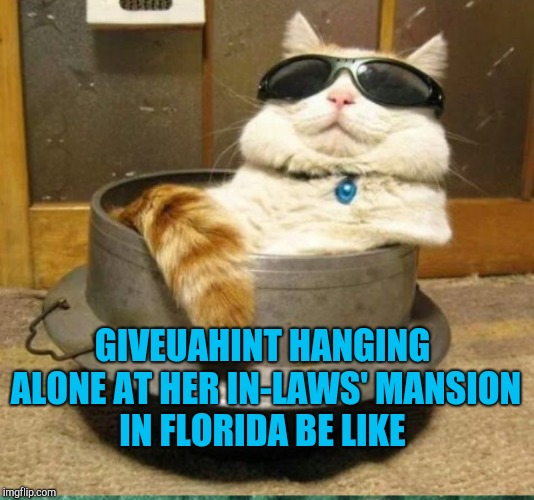giveuahint's having to rough it with a fancy house, pool, and hot tub all to herself lol. And thanks to her for the template  | GIVEUAHINT HANGING ALONE AT HER IN-LAWS' MANSION IN FLORIDA BE LIKE | image tagged in giveuahint,jbmemegeek,memes,cats,funny cats | made w/ Imgflip meme maker