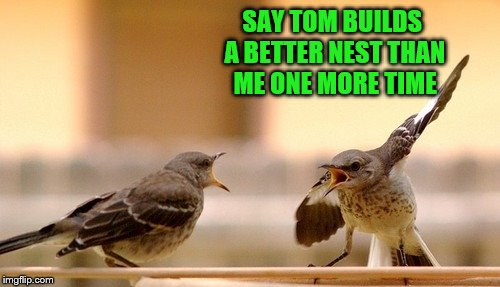 About to get bird-slapped! | SAY TOM BUILDS A BETTER NEST THAN ME ONE MORE TIME | image tagged in memes,birds,arguing,say it one more time | made w/ Imgflip meme maker