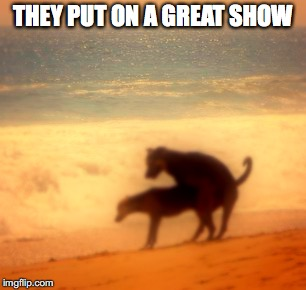 two dogs fucking | THEY PUT ON A GREAT SHOW | image tagged in two dogs fucking | made w/ Imgflip meme maker
