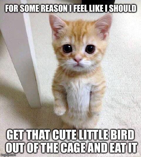 Cute Cat Meme | FOR SOME REASON I FEEL LIKE I SHOULD GET THAT CUTE LITTLE BIRD OUT OF THE CAGE AND EAT IT | image tagged in memes,cute cat | made w/ Imgflip meme maker