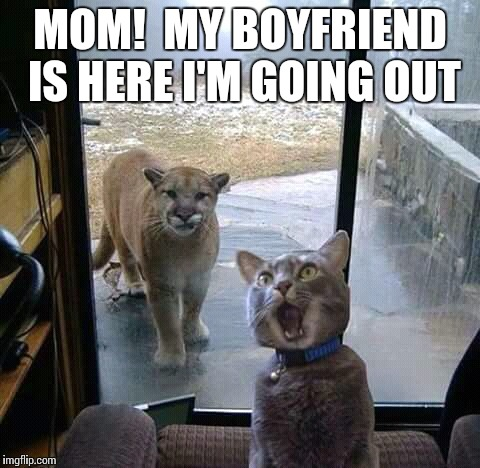MOM!  MY BOYFRIEND IS HERE I'M GOING OUT | image tagged in mom,memes,funny memes,cats | made w/ Imgflip meme maker
