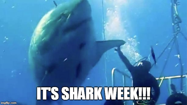 High Five, it's Shark Week!  | IT'S SHARK WEEK!!! | image tagged in shark week,sharks,humor | made w/ Imgflip meme maker