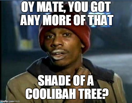you got anymore | OY MATE, YOU GOT ANY MORE OF THAT SHADE OF A COOLIBAH TREE? | image tagged in you got anymore | made w/ Imgflip meme maker