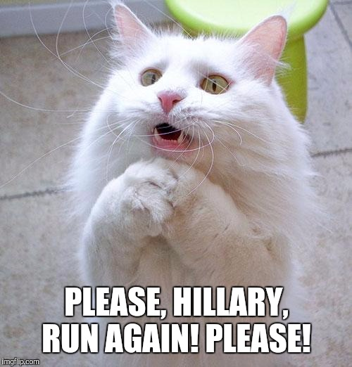 Begging Cat | PLEASE, HILLARY, RUN AGAIN! PLEASE! | image tagged in begging cat | made w/ Imgflip meme maker