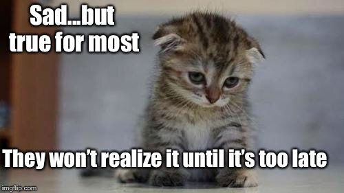 Sad kitten | Sad...but true for most They won't realize it until it's too late | image tagged in sad kitten | made w/ Imgflip meme maker