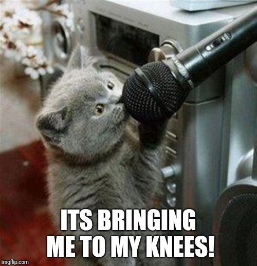 Cat microphone | ITS BRINGING ME TO MY KNEES! | image tagged in cat microphone | made w/ Imgflip meme maker