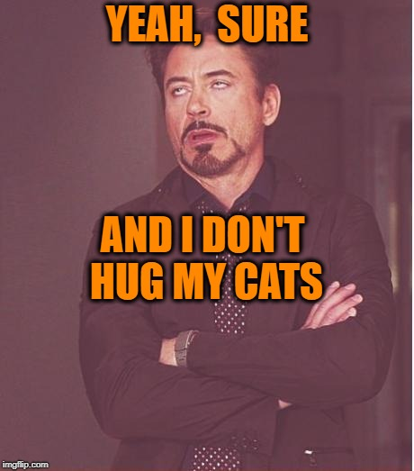 Face You Make Robert Downey Jr Meme | YEAH,  SURE AND I DON'T HUG MY CATS | image tagged in memes,face you make robert downey jr | made w/ Imgflip meme maker