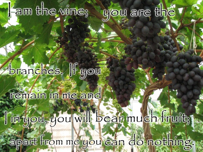 John 15:5 I am the Vine, You are the branches | I am the vine; can do nothing. you are the I in you, you will branches.  If you bear much fruit; apart from me you remain in me and | image tagged in bible,bible verse,holy bible,holy spirit,jesus,verse | made w/ Imgflip meme maker