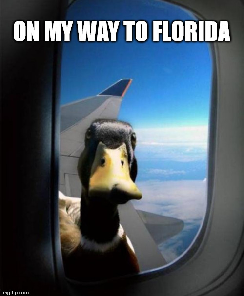Duck on plane wing | ON MY WAY TO FLORIDA | image tagged in duck on plane wing | made w/ Imgflip meme maker