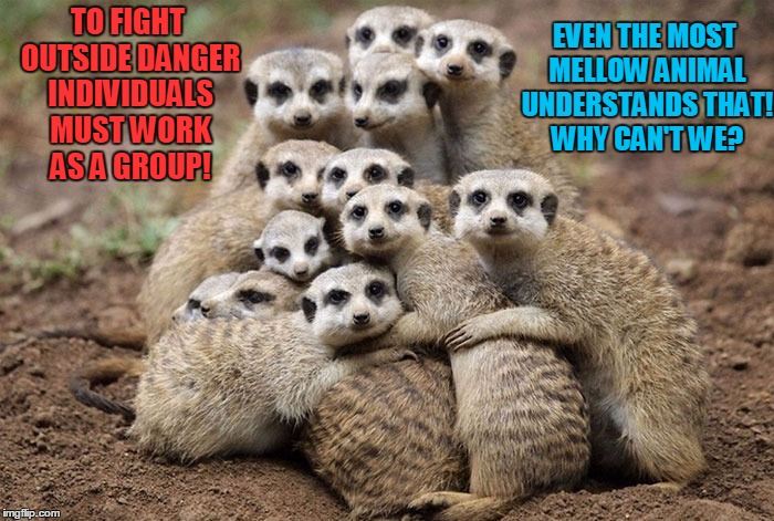 Animal Instinct!  | TO FIGHT OUTSIDE DANGER INDIVIDUALS MUST WORK AS A GROUP! EVEN THE MOST MELLOW ANIMAL UNDERSTANDS THAT! WHY CAN'T WE? | image tagged in animals hugging,democratic party,republicans,trump russia collusion,voting booth | made w/ Imgflip meme maker