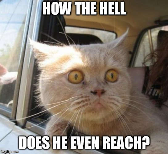 amazed cat | HOW THE HELL DOES HE EVEN REACH? | image tagged in amazed cat | made w/ Imgflip meme maker