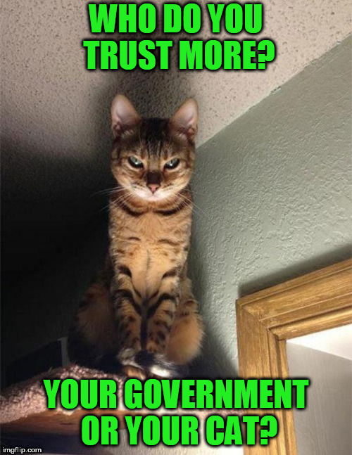 WHO DO YOU TRUST MORE? YOUR GOVERNMENT OR YOUR CAT? | image tagged in plottingcat | made w/ Imgflip meme maker