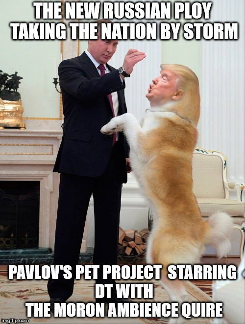 Pavlov's Pet Project | THE NEW RUSSIAN PLOY TAKING THE NATION BY STORM PAVLOV'S PET PROJECTSTARRING DT WITH THE MORON AMBIENCE QUIRE | image tagged in donald trump pavlov russian meddling mindless fools | made w/ Imgflip meme maker