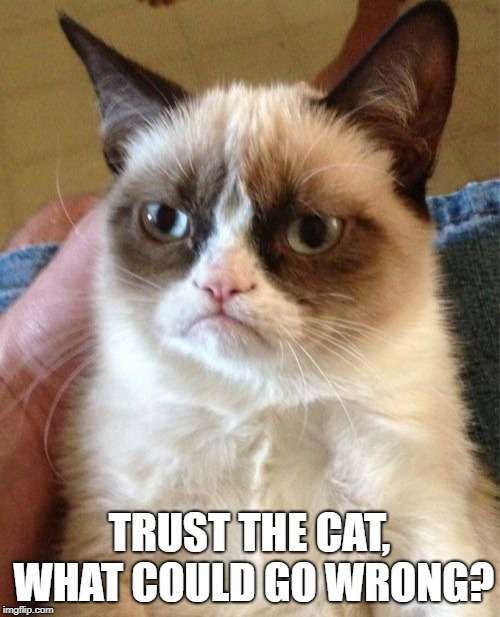 Grumpy Cat Meme | TRUST THE CAT, WHAT COULD GO WRONG? | image tagged in memes,grumpy cat | made w/ Imgflip meme maker