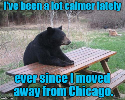 Bad Luck Bear Meme | I've been a lot calmer lately ever since I moved away from Chicago. | image tagged in memes,bad luck bear | made w/ Imgflip meme maker