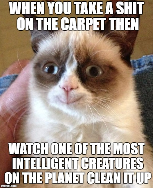 Grumpy Cat Happy | WHEN YOU TAKE A SHIT ON THE CARPET THEN WATCH ONE OF THE MOST INTELLIGENT CREATURES ON THE PLANET CLEAN IT UP | image tagged in memes,grumpy cat happy,grumpy cat,random | made w/ Imgflip meme maker