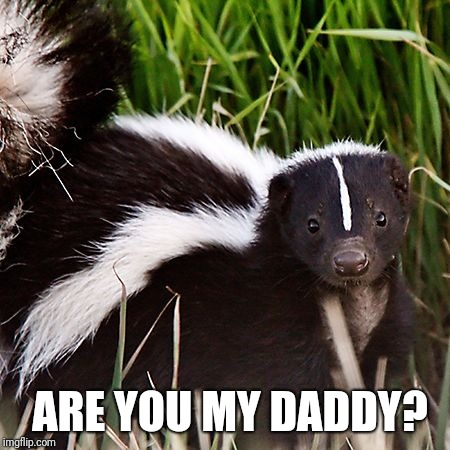 skunk | ARE YOU MY DADDY? | image tagged in skunk | made w/ Imgflip meme maker