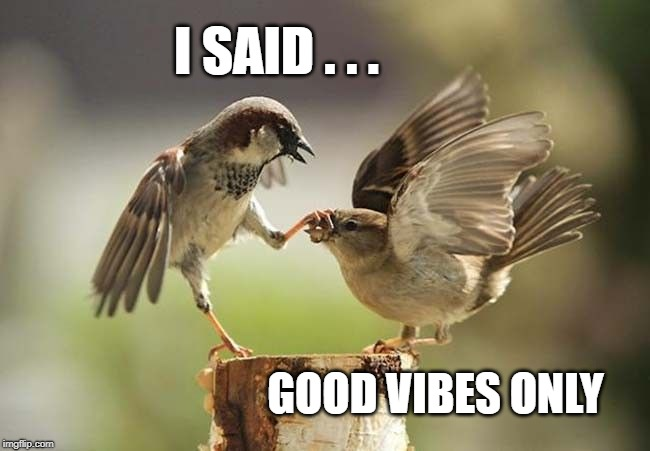 Birds shut up | I SAID . . . GOOD VIBES ONLY | image tagged in birds shut up,good vibes,upvotes only,what if i told you,what do we want,positive thinking | made w/ Imgflip meme maker