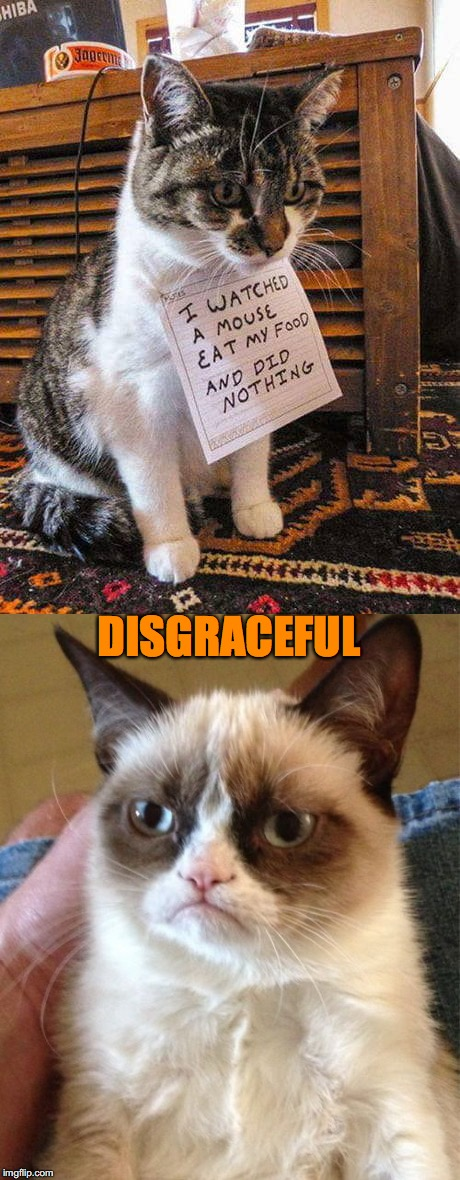 Kitty Fail | DISGRACEFUL | image tagged in grumpy cat,disgrace,mouse | made w/ Imgflip meme maker