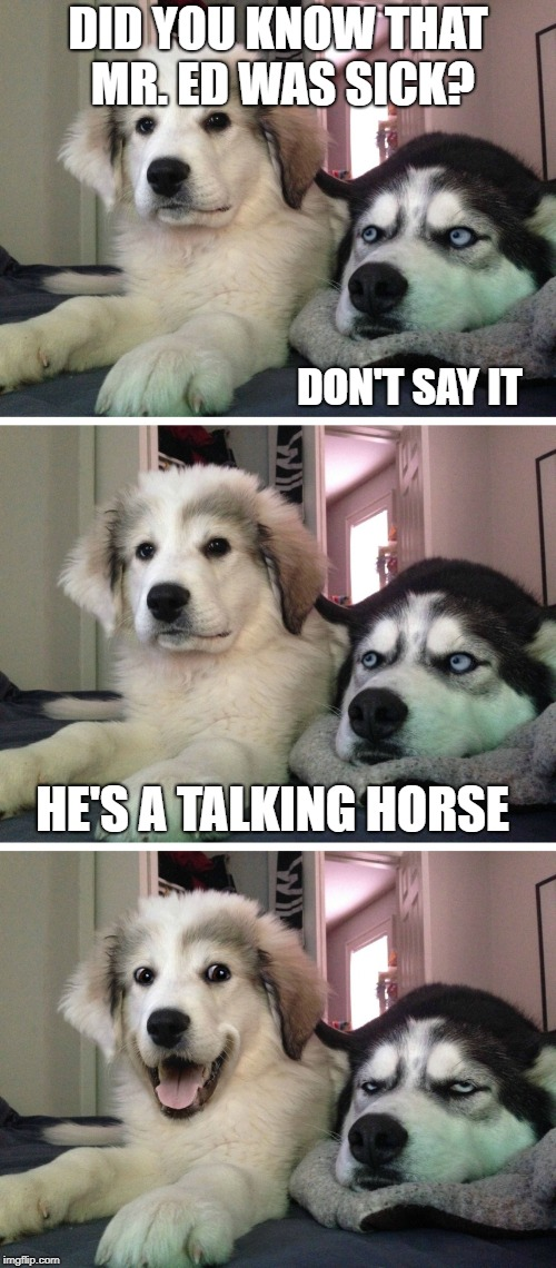 Bad pun dogs | DID YOU KNOW THAT MR. ED WAS SICK? HE'S A TALKING HORSE DON'T SAY IT | image tagged in bad pun dogs | made w/ Imgflip meme maker
