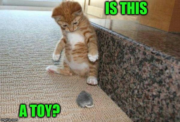 cat & mouse | IS THIS A TOY? | image tagged in cat  mouse | made w/ Imgflip meme maker