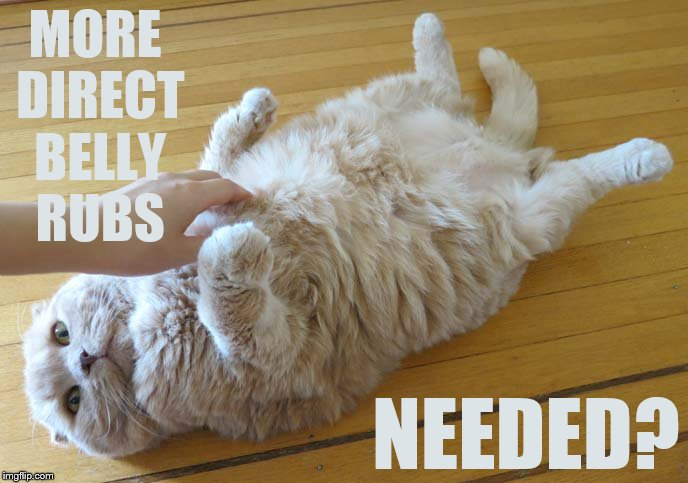 MORE DIRECT BELLY RUBS NEEDED? | made w/ Imgflip meme maker