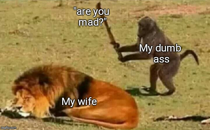 "Never a good idea | My dumb ass My wife ""are you mad?"" 