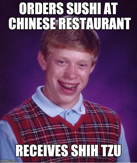 Bad Luck Brian Meme | ORDERS SUSHI AT CHINESE RESTAURANT RECEIVES SHIH TZU | image tagged in memes,bad luck brian | made w/ Imgflip meme maker