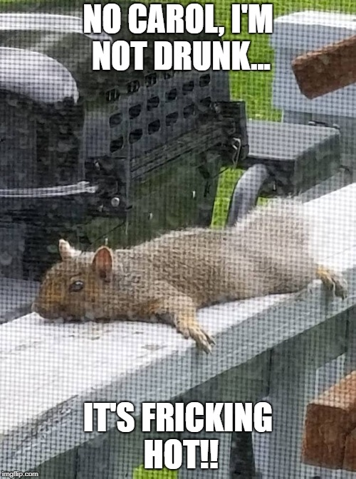 NO CAROL, I'M NOT DRUNK... IT'S FRICKING HOT!! | image tagged in hot squirrel | made w/ Imgflip meme maker