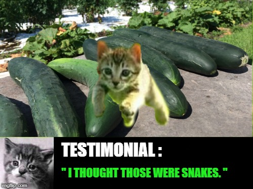 "Head for the hills | TESTIMONIAL : "" I THOUGHT THOSE WERE SNAKES. "" 