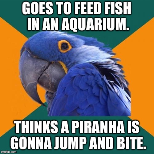 Jumping piranhas | GOES TO FEED FISH IN AN AQUARIUM. THINKS A PIRANHA IS GONNA JUMP AND BITE. | image tagged in memes,paranoid parrot,piranha,fish,attack,joke | made w/ Imgflip meme maker
