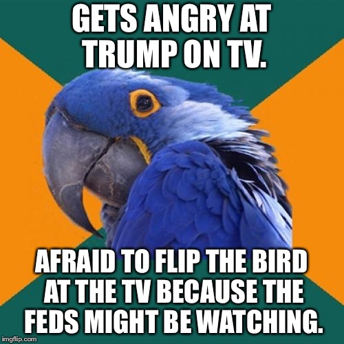 Feds are watching | GETS ANGRY AT TRUMP ON TV. AFRAID TO FLIP THE BIRD AT THE TV BECAUSE THE FEDS MIGHT BE WATCHING. | image tagged in memes,paranoid parrot,flip the bird,government,trump,tv | made w/ Imgflip meme maker