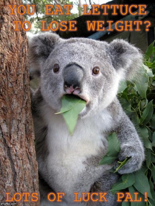 Surprised Koala Meme | YOU EAT LETTUCE TO LOSE WEIGHT? LOTS OF LUCK PAL! | image tagged in memes,surprised koala | made w/ Imgflip meme maker