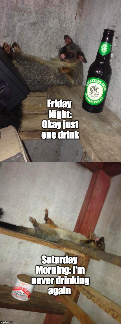 Friday Nights in Australia  | Friday Night: Okay just one drink Saturday Morning: I'm never drinking again | image tagged in friday night,australia,meanwhile in australia | made w/ Imgflip meme maker