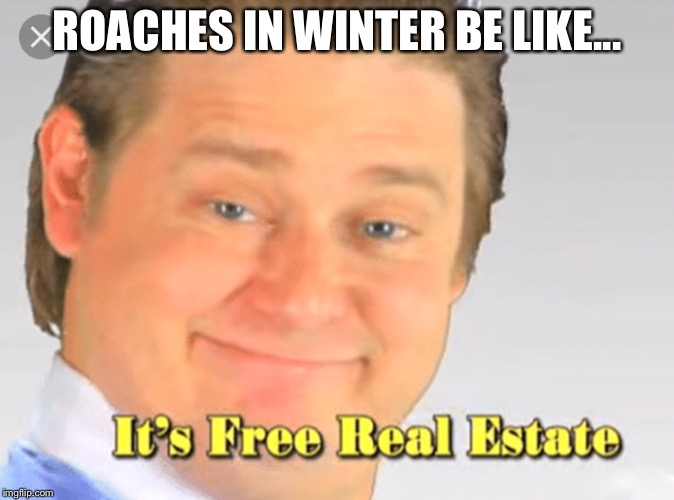 It's Free Real Estate! | ROACHES IN WINTER BE LIKE... | image tagged in memes,it's free real estate,relatable | made w/ Imgflip meme maker