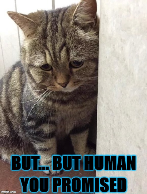 BUT... BUT HUMAN YOU PROMISED | image tagged in sad kitty | made w/ Imgflip meme maker