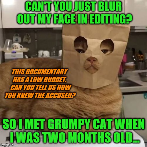 """Friend of Grumpy Cat mysteriously disappears after interview"" 