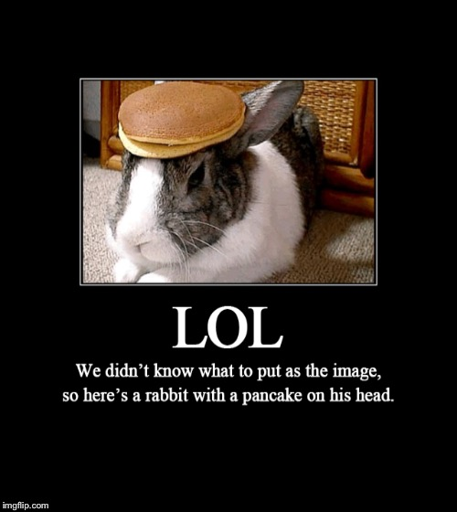 image tagged in funny,pancakes,bunnies | made w/ Imgflip meme maker
