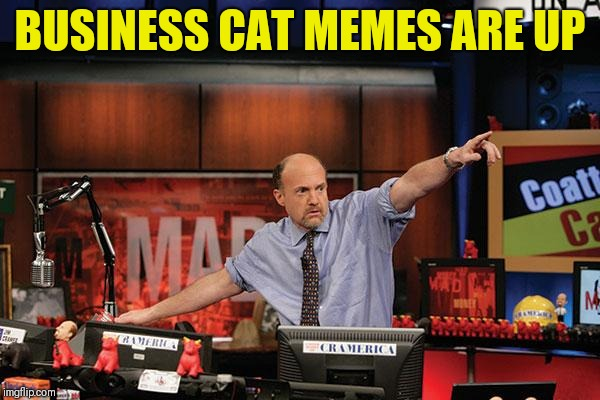 Mad Money Jim Cramer Meme | BUSINESS CAT MEMES ARE UP | image tagged in memes,mad money jim cramer | made w/ Imgflip meme maker