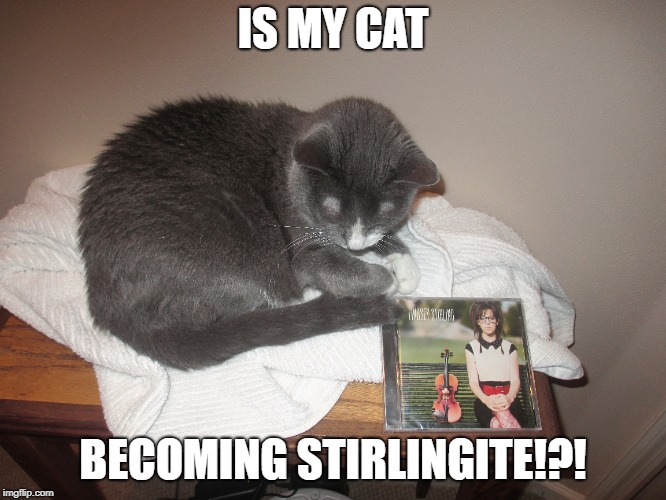 Is this a sign? IS MY CAT STIRLINGITE TOO??? | IS MY CAT BECOMING STIRLINGITE!?! | image tagged in lindsey stirling,funny cats,cats | made w/ Imgflip meme maker